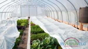 manta-termica-invernavelo-cultivo-en-invernadero-protegido